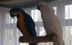 Więcej o: Papugi