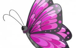 Więcej o: Dzień z życia Motylków