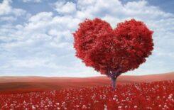 Więcej o: Walentynki