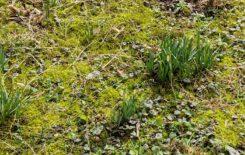 Więcej o: Biedronki szukają wiosny